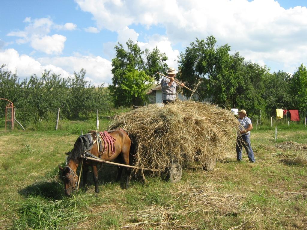 Hooien met paard en wagen